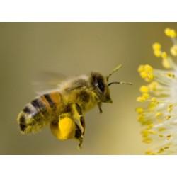 Pyłek kwiatowy 200 g 1